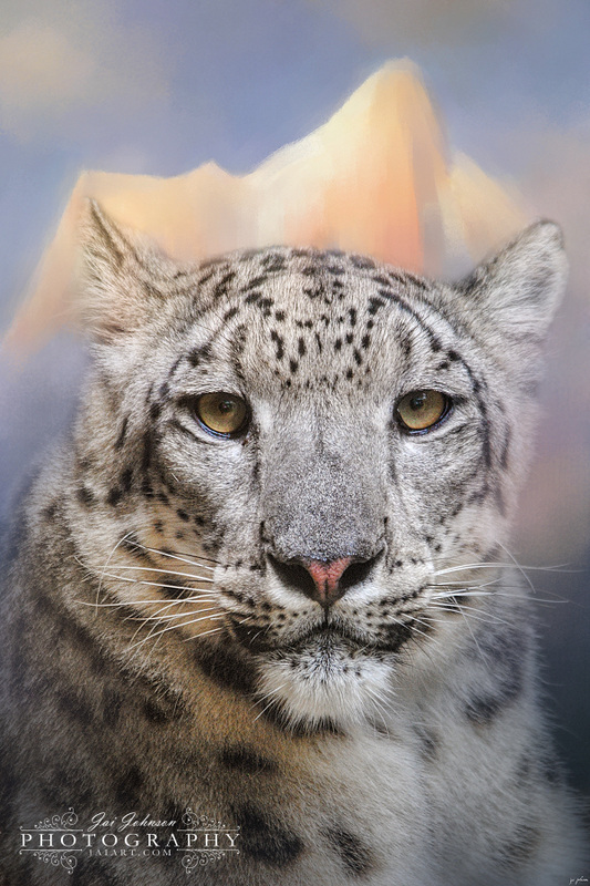 Snow Leopard At The Mountain