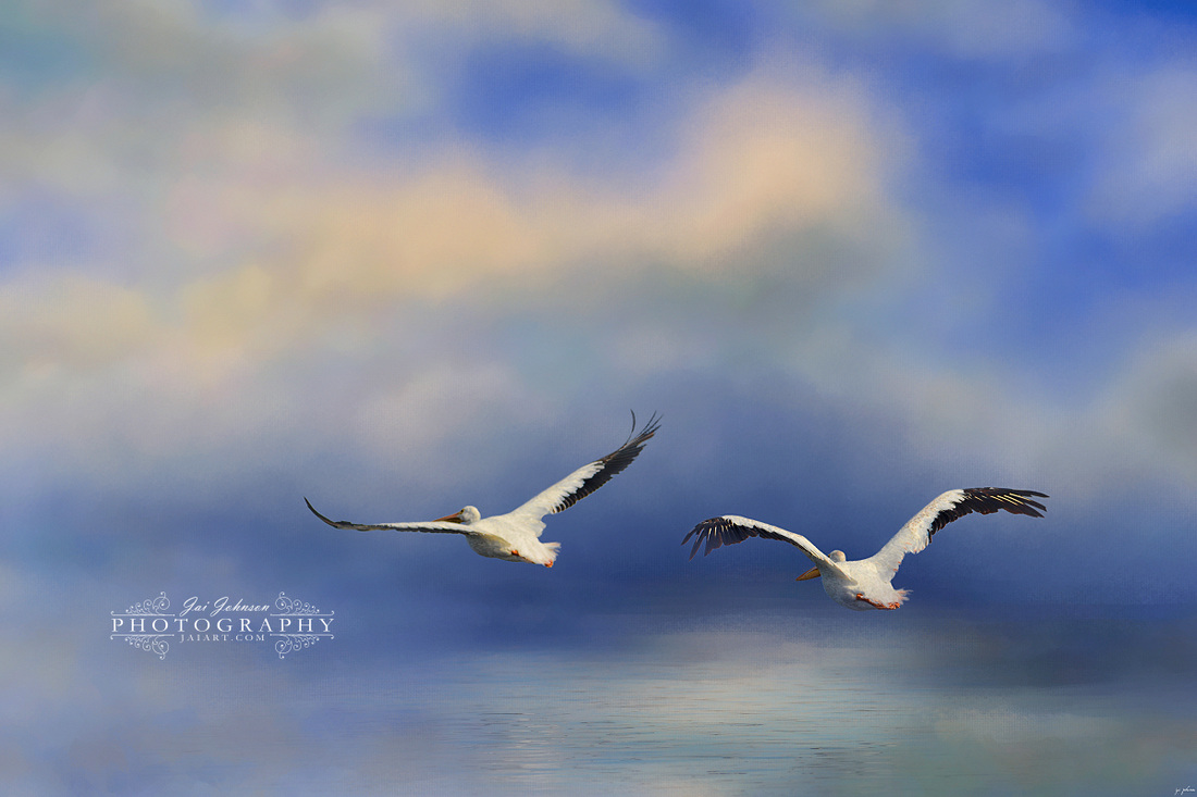 Pelicans At Sea Ocean Art