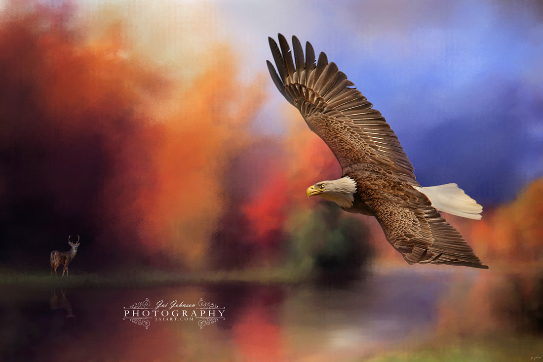 Fall Flight - Bald Eagle