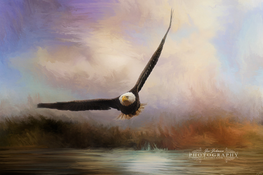 Eagle In The Marsh