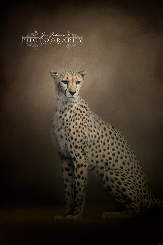 The Elegant Cheetah Wildcat Art