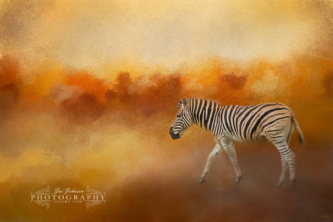 In The Heat of The Summer - Zebra
