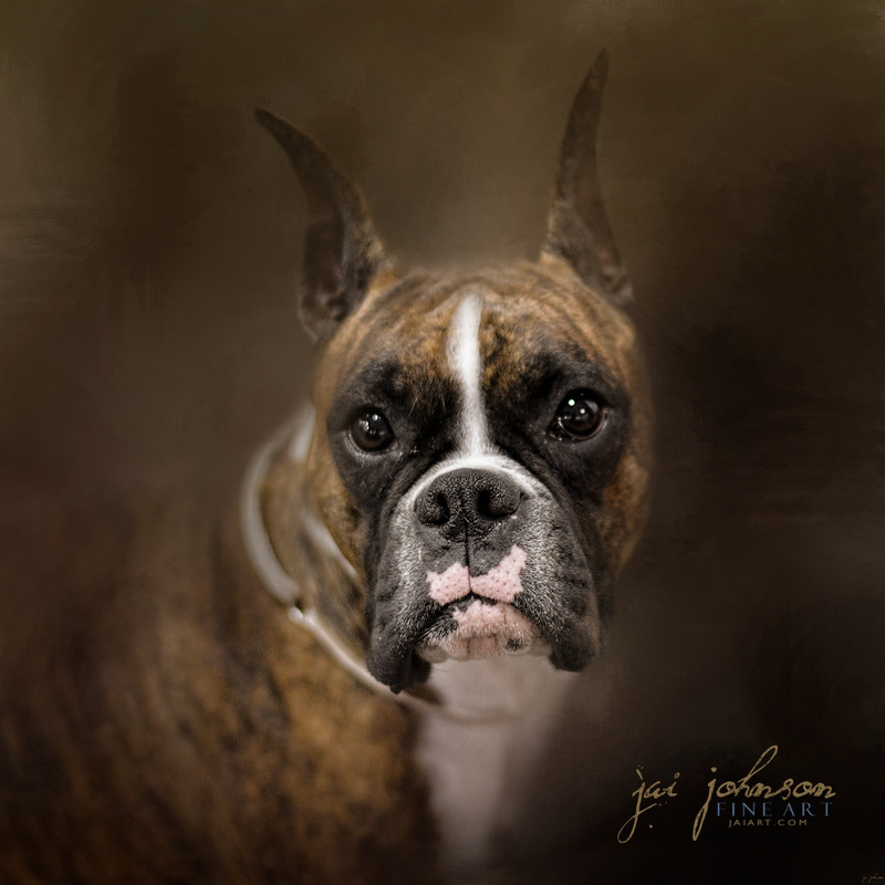 Curious Boxer - dog art