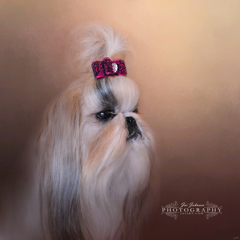 All Dolled Up - Shih Tzu Art