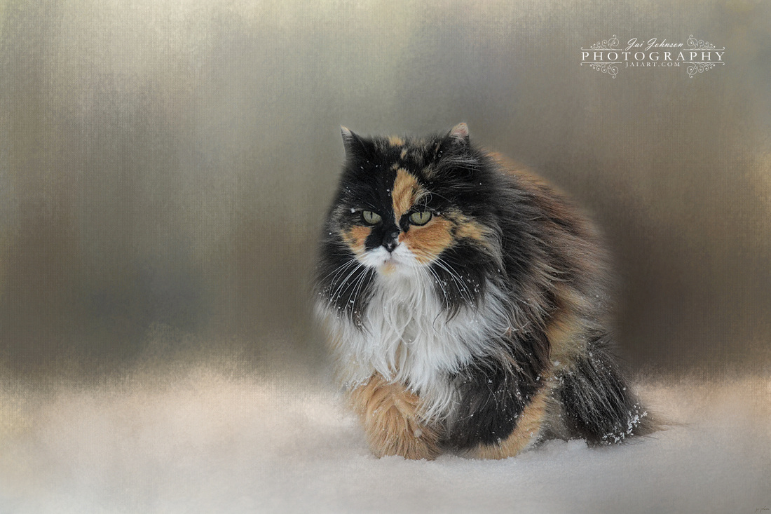 Winter Journey - Cat Art