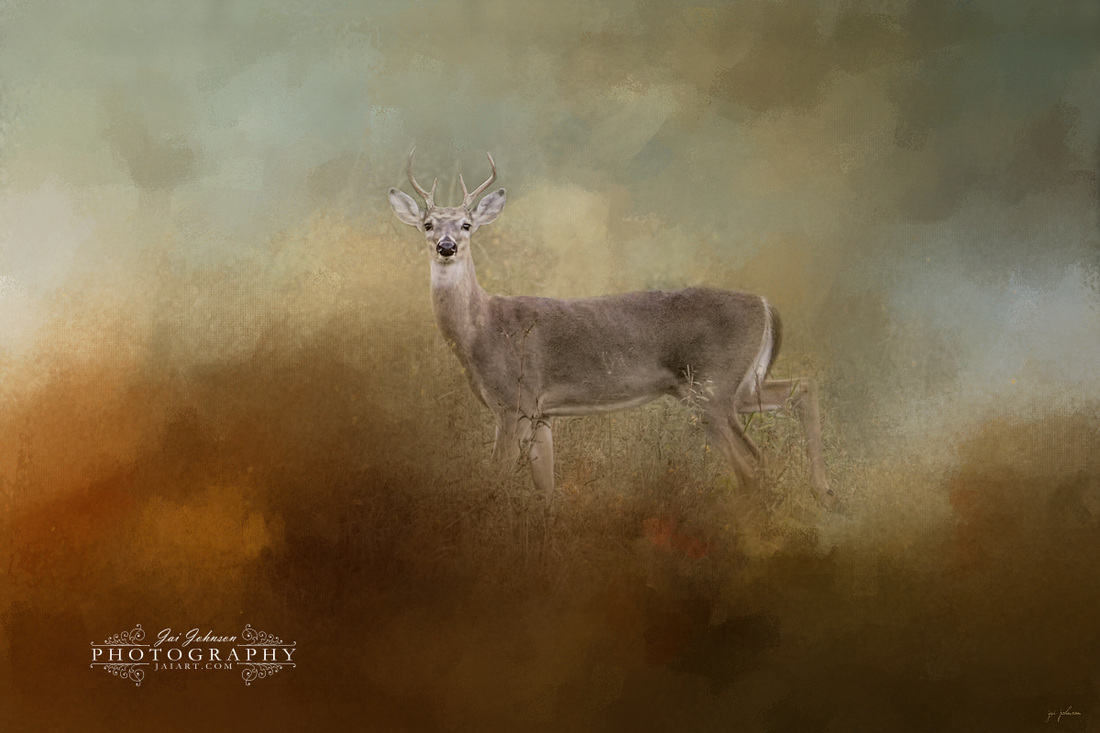 Old Master - White Tailed Buck