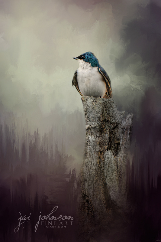 Resting Tree Swallow Bird Art