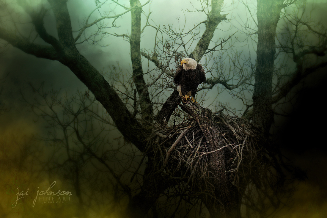 Storm At The Old Nest - Eagle Art
