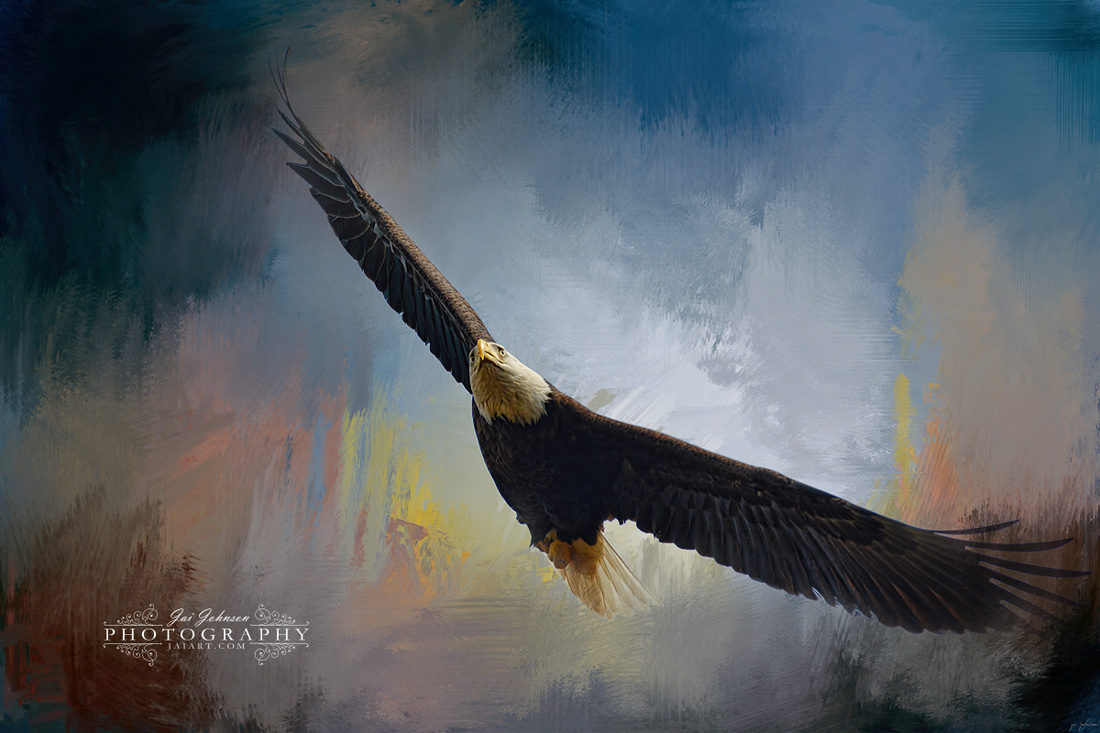 Ascending - Bald Eagle Art