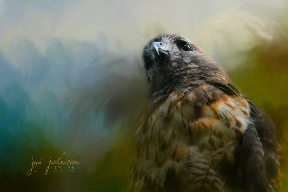First Morning Light Hawk Art