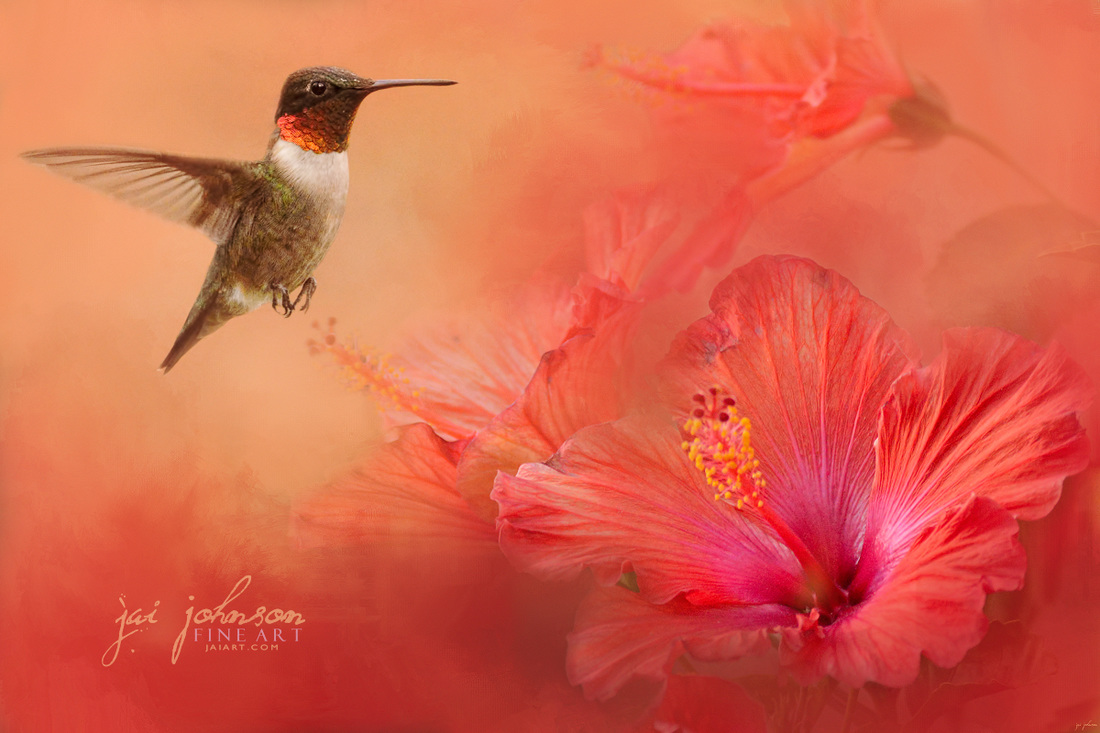 Hummingbird and Peach Hibiscus Art