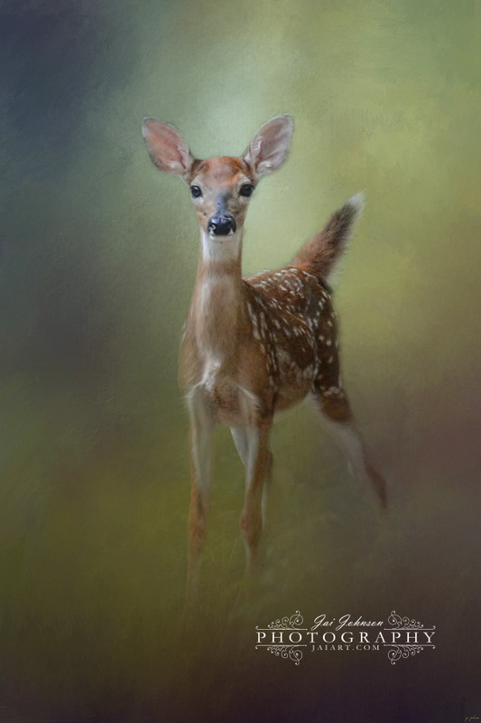 Fawn In The Forest - White Tailed Deer Art