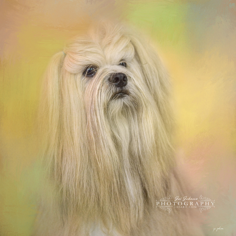 Spring Lhasa Apso Dog Art