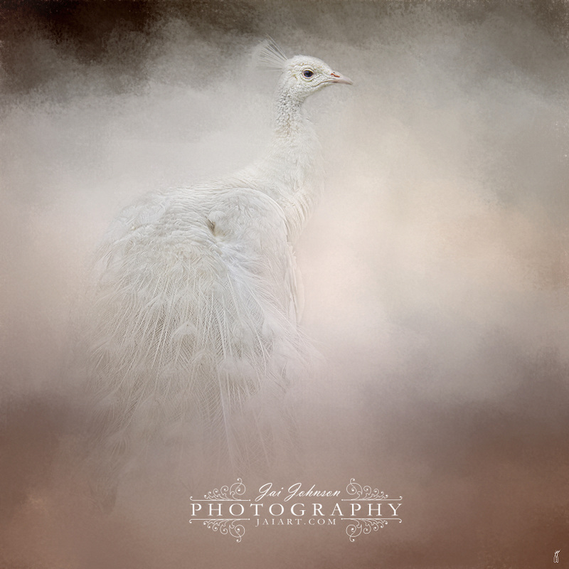Purity - White Peacock