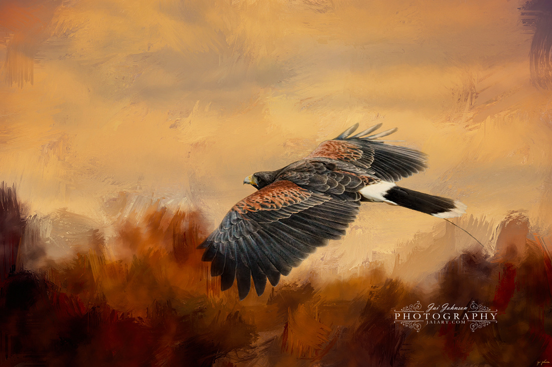 Harris Hawk in Autumn Art