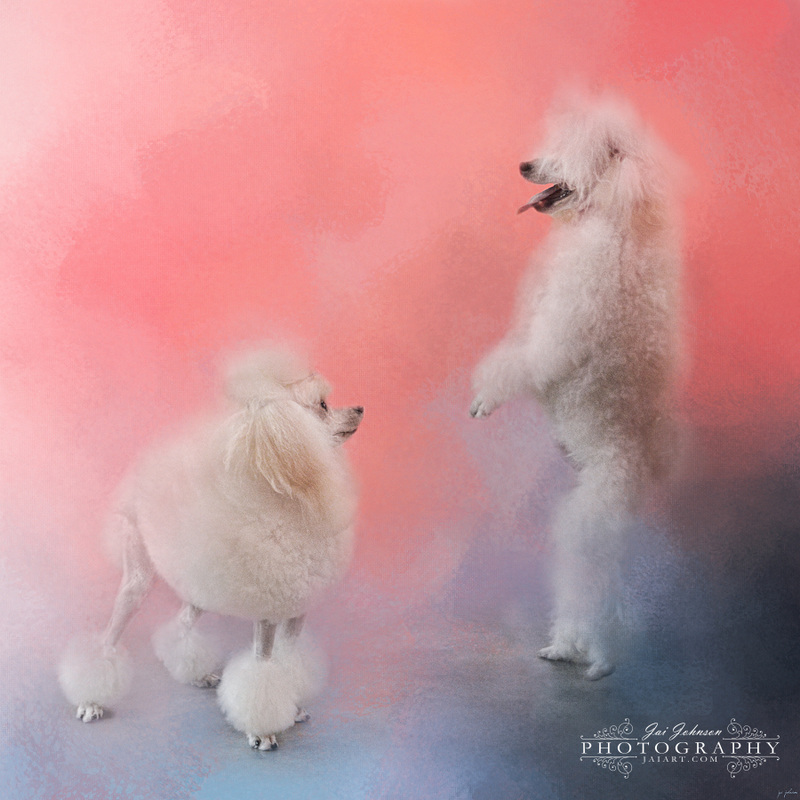 Dance With Me - Poodle Art