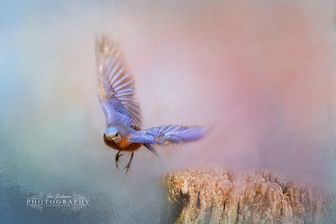 Bluebird Escape