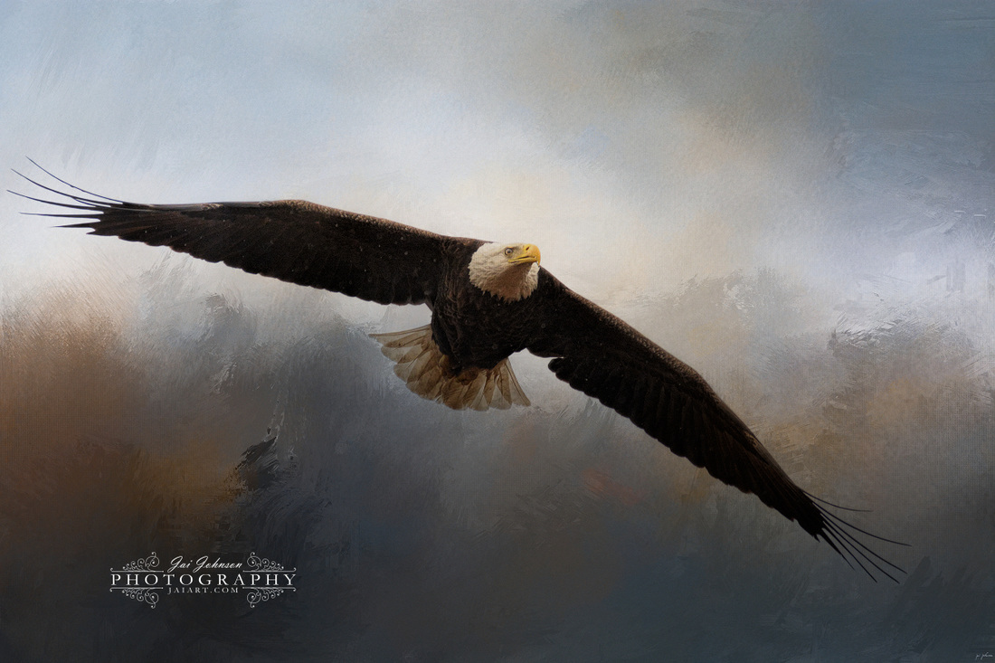 In The Midst Of The Storm - Bald Eagle Art