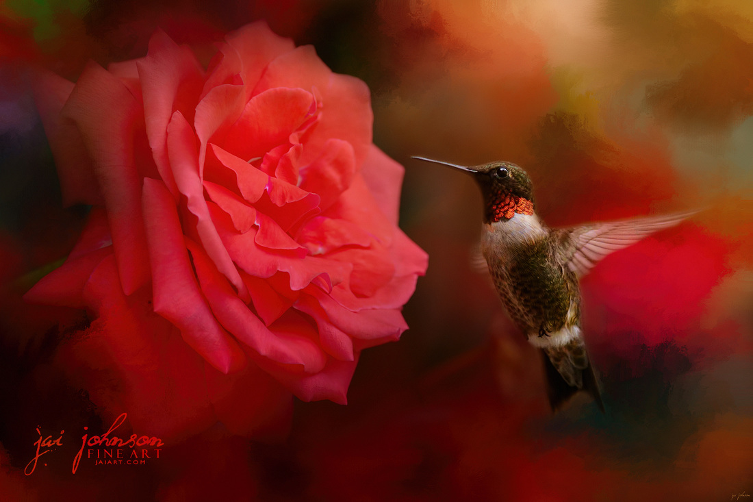 After The Big Rose - Hummingbird Art
