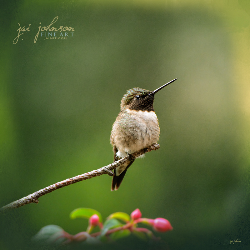 Hummingbird In The Garden - Bird Art