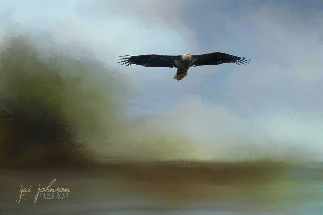 Juvenile Eagle At The Lake - Eagle Art